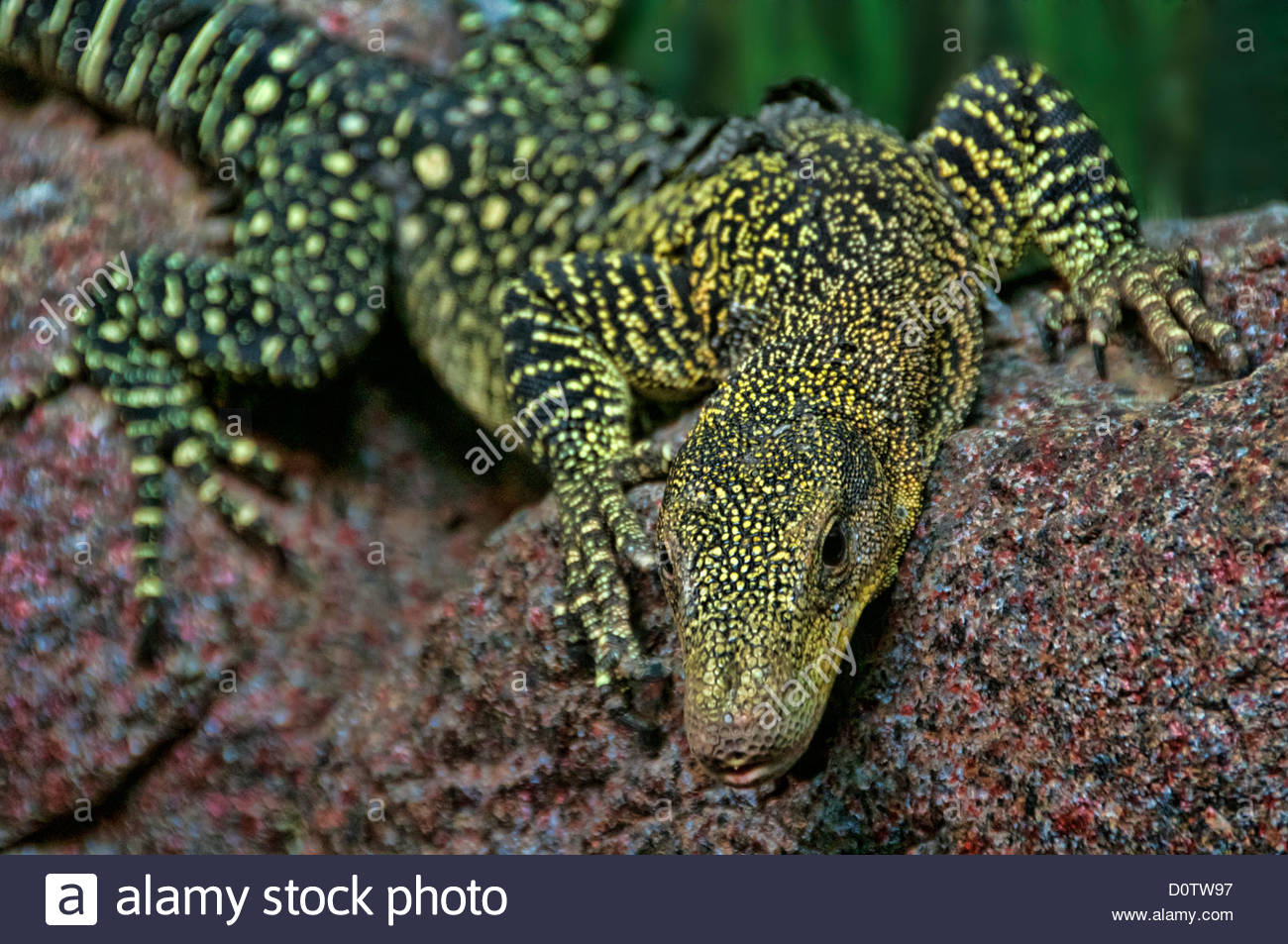Crocodile Monitor clipart #4, Download drawings