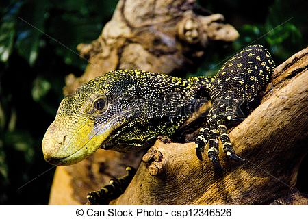 Crocodile Monitor clipart #10, Download drawings