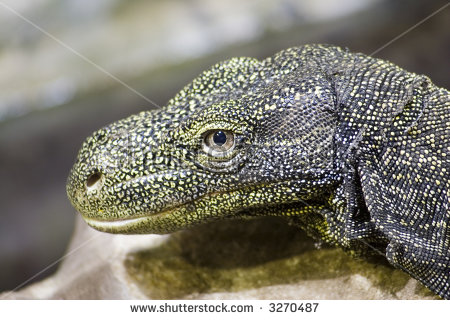 Crocodile Monitor clipart #17, Download drawings