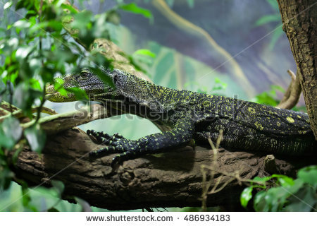 Crocodile Monitor clipart #13, Download drawings