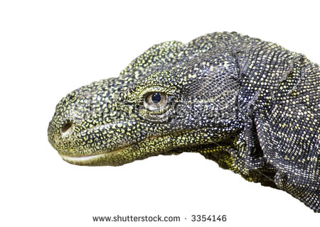 Crocodile Monitor coloring #5, Download drawings