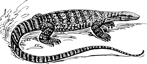 Crocodile Monitor svg #19, Download drawings