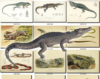 Crocodile Monitor svg #12, Download drawings