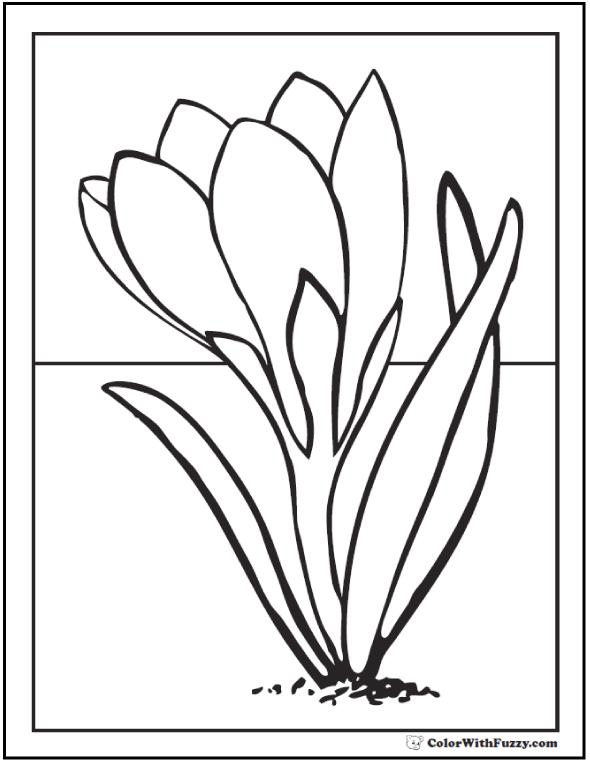 Crocus coloring #8, Download drawings
