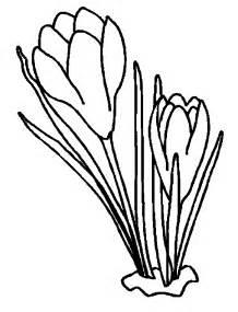 Crocus coloring #10, Download drawings