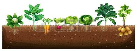 Crops clipart #12, Download drawings