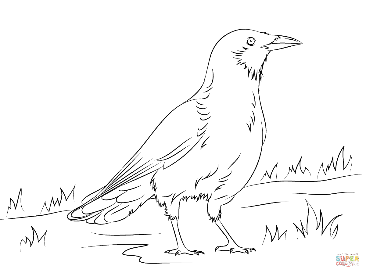 Crow coloring #14, Download drawings