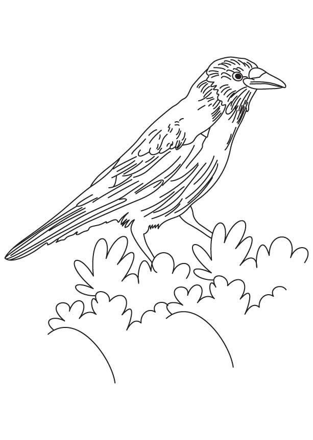 Crow coloring #1, Download drawings