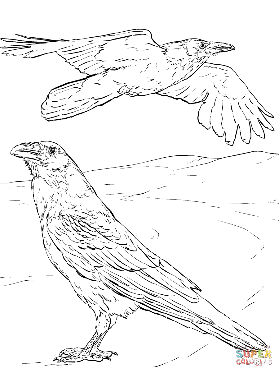 Common Raven coloring #17, Download drawings