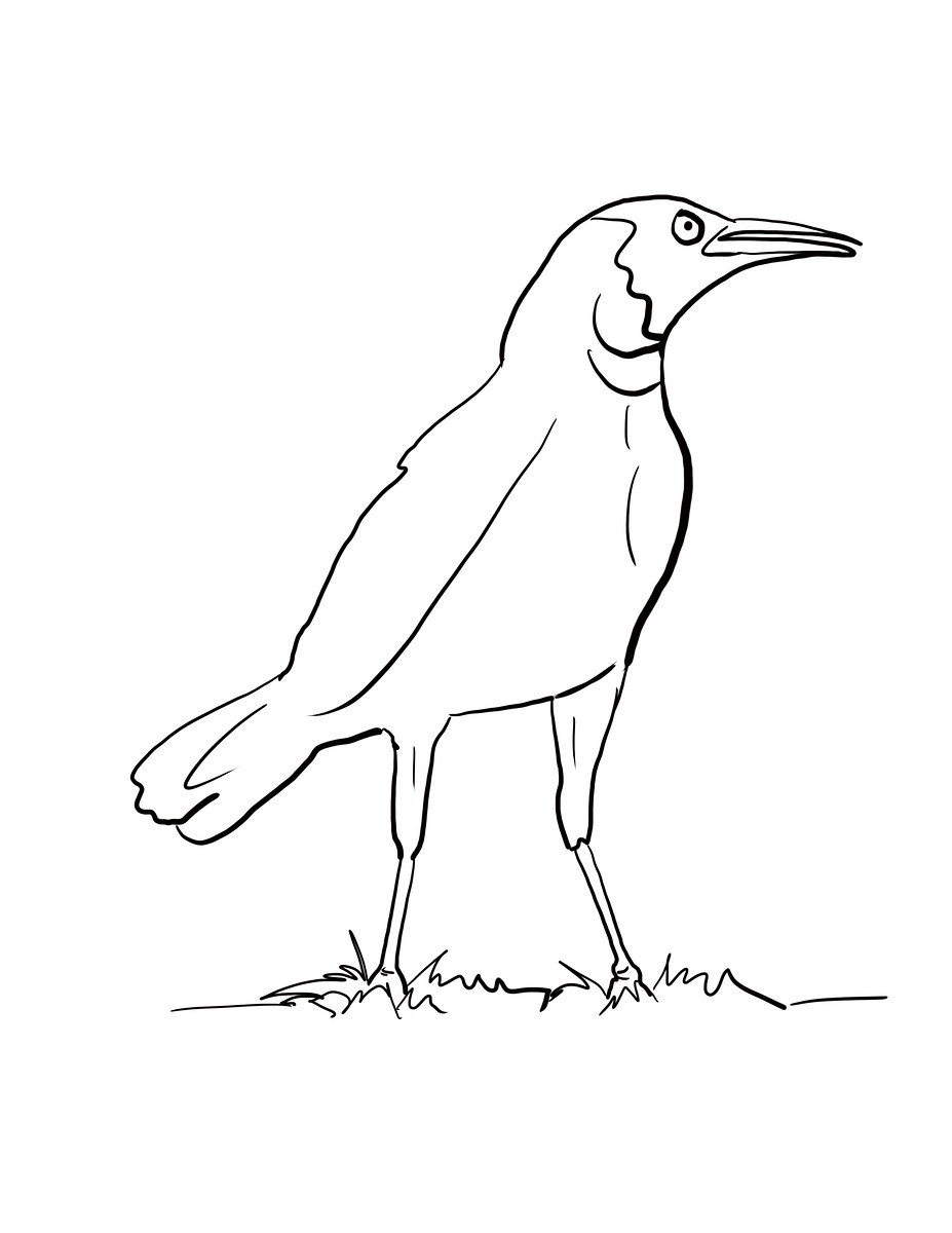 Crow coloring #12, Download drawings