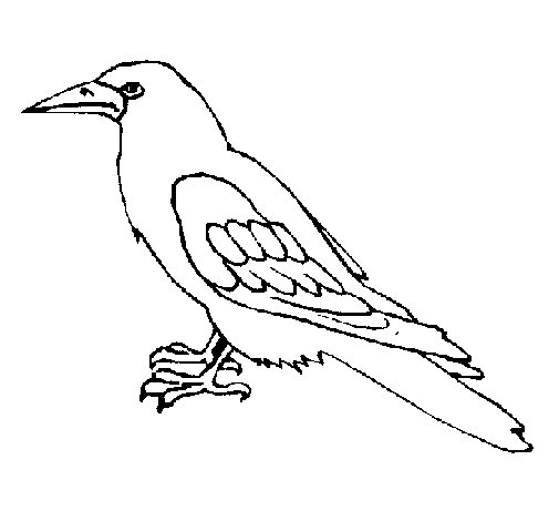 Crow coloring #6, Download drawings