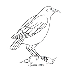 Crow coloring #3, Download drawings