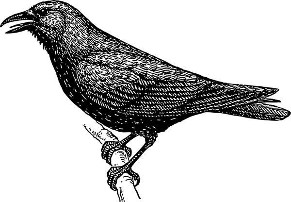 Crow svg #9, Download drawings