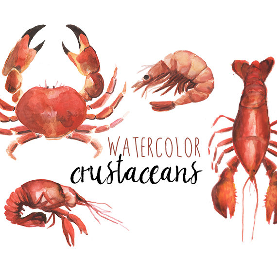 Crustacean clipart #1, Download drawings