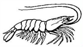 Crustacean clipart #19, Download drawings