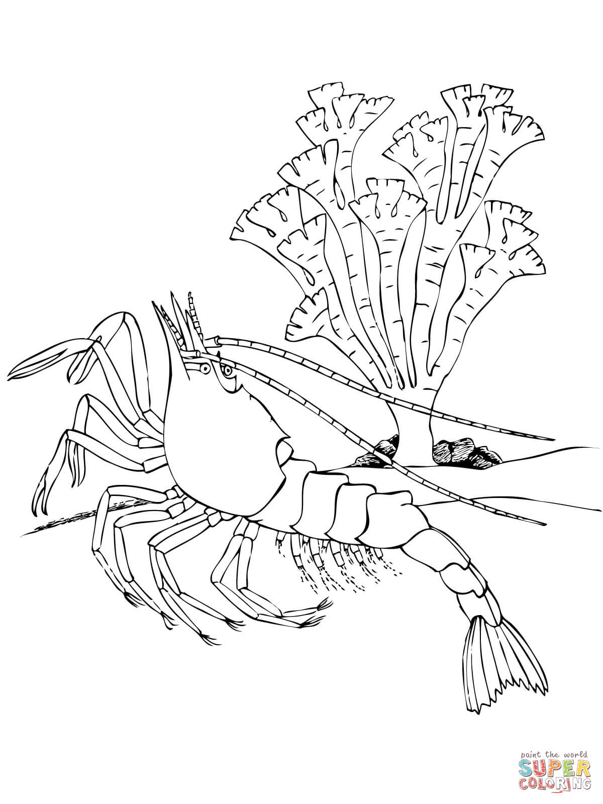 Crustacean coloring #2, Download drawings