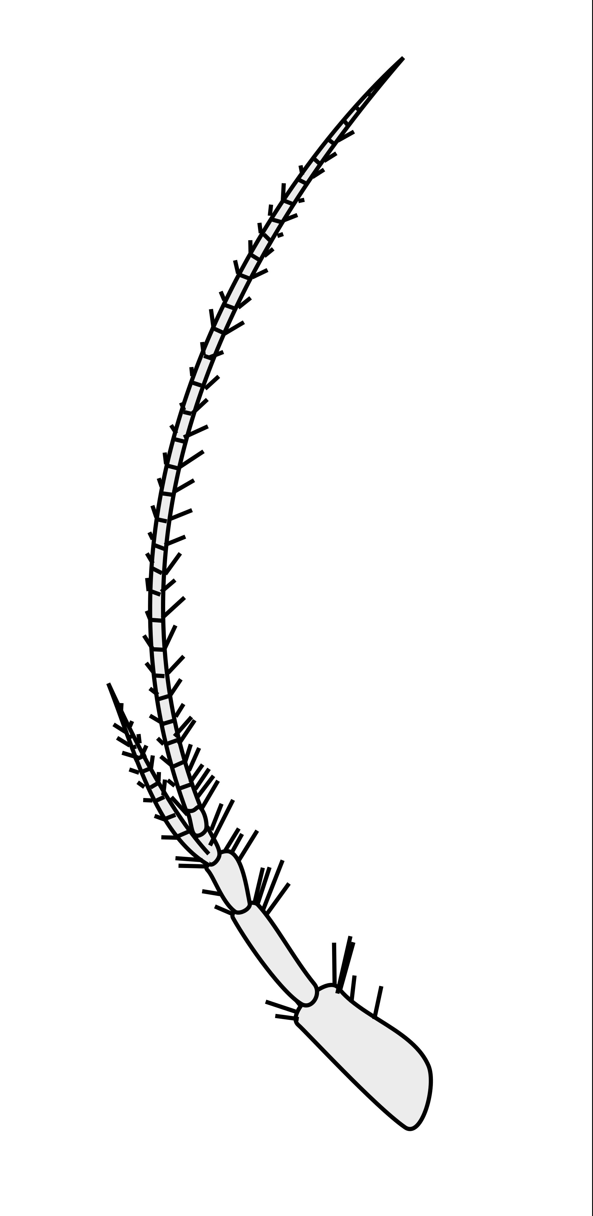 Crustacean svg #12, Download drawings