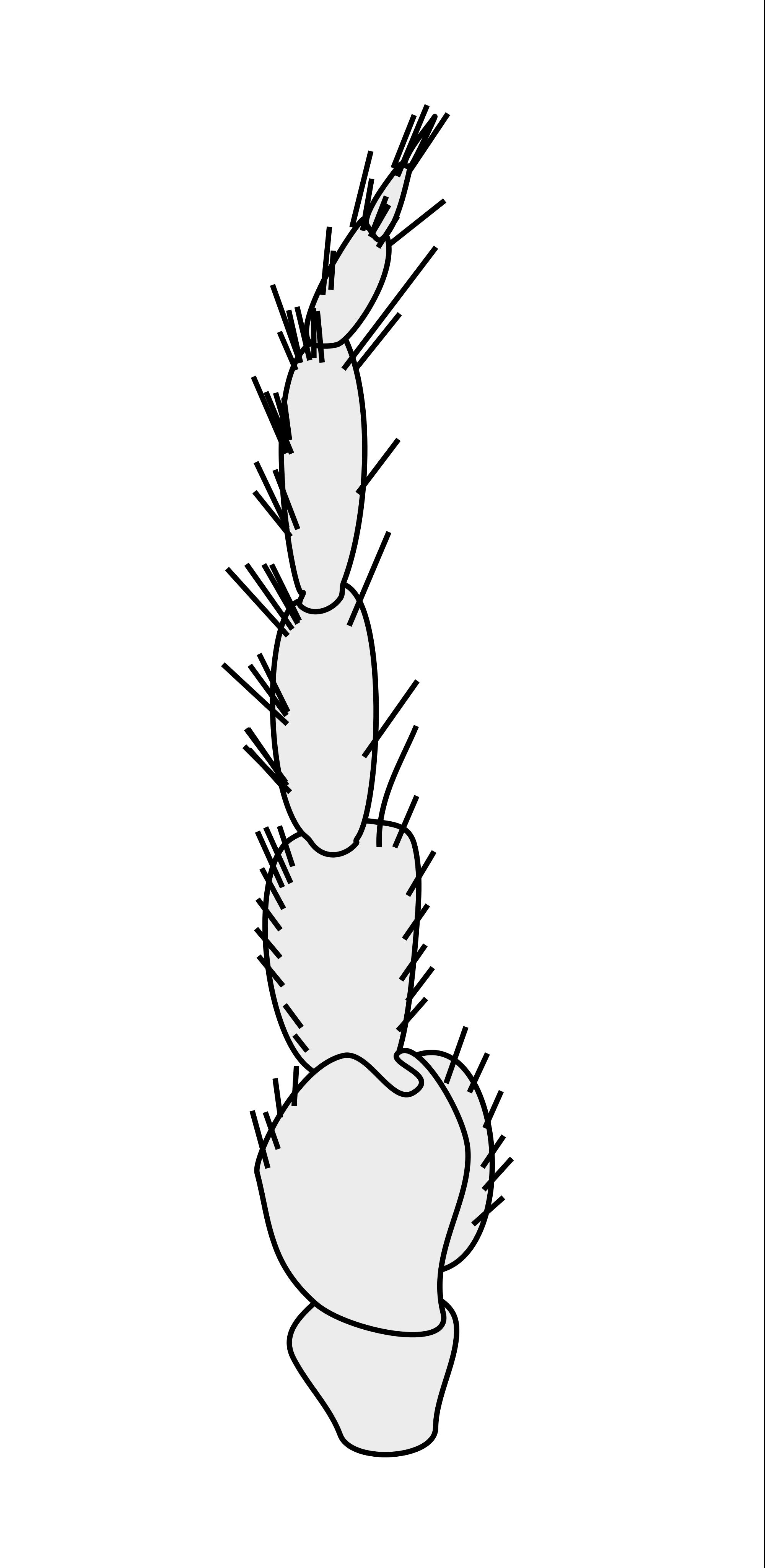 Crustacean svg #6, Download drawings