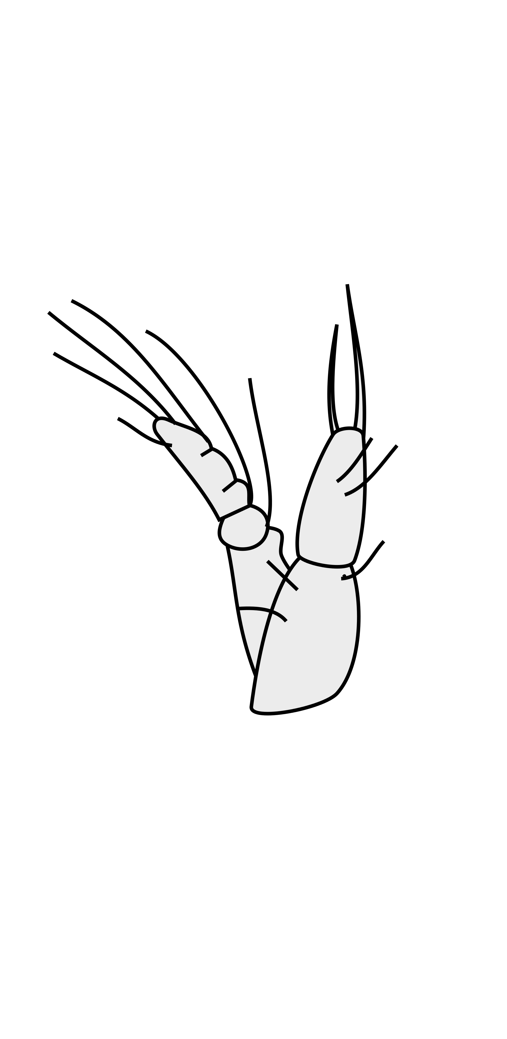 Crustacean svg #9, Download drawings