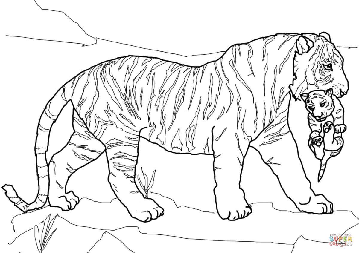Cub coloring #5, Download drawings