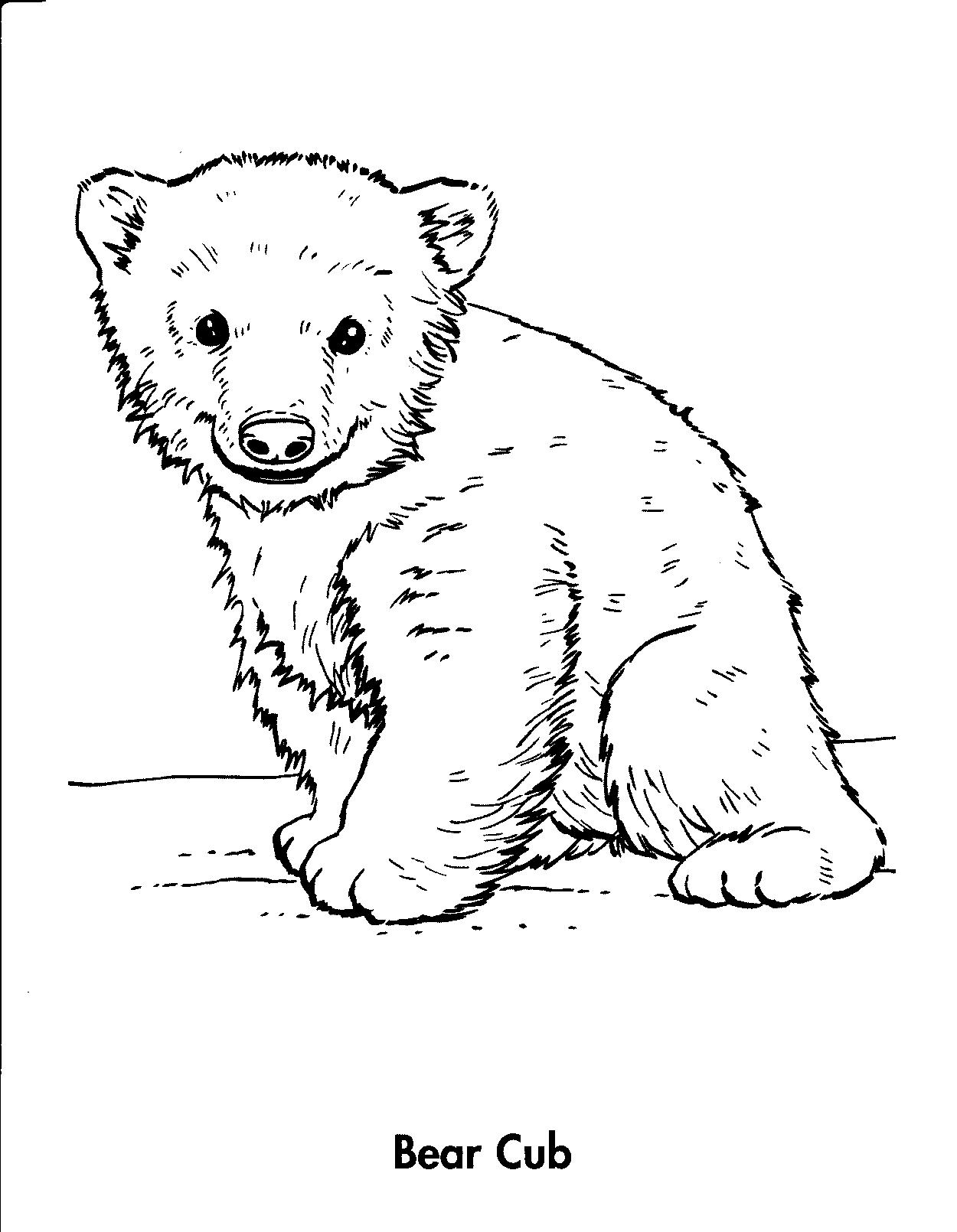 Bear Cub coloring #19, Download drawings