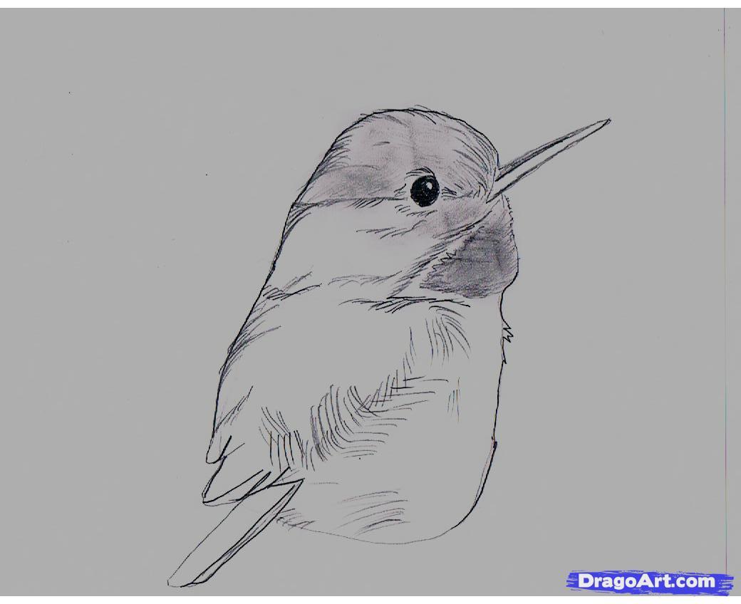 Cuban Tody coloring #14, Download drawings