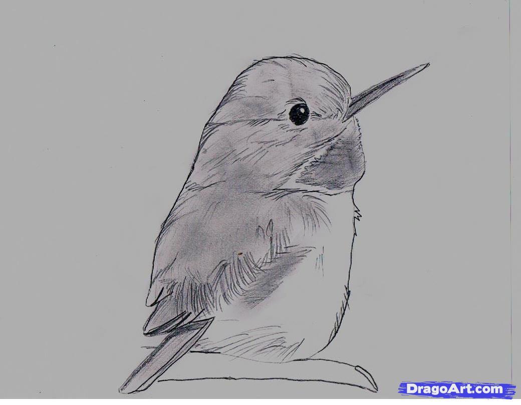 Cuban Tody coloring #13, Download drawings