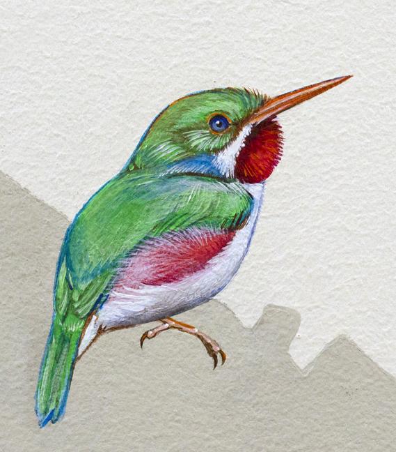 Cuban Tody coloring #2, Download drawings