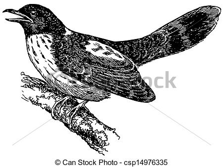Cuckoo clipart #8, Download drawings