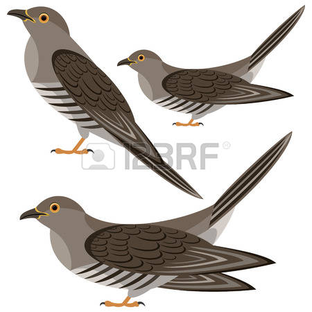 Cuckoo clipart #9, Download drawings