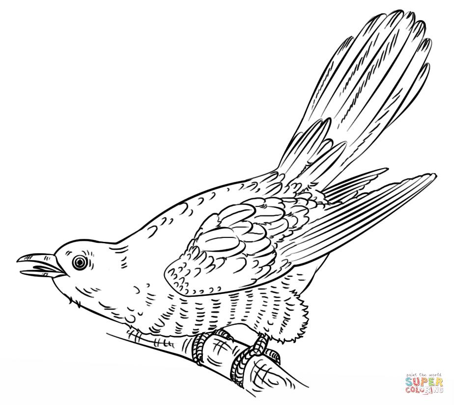 Cuckoo coloring #16, Download drawings