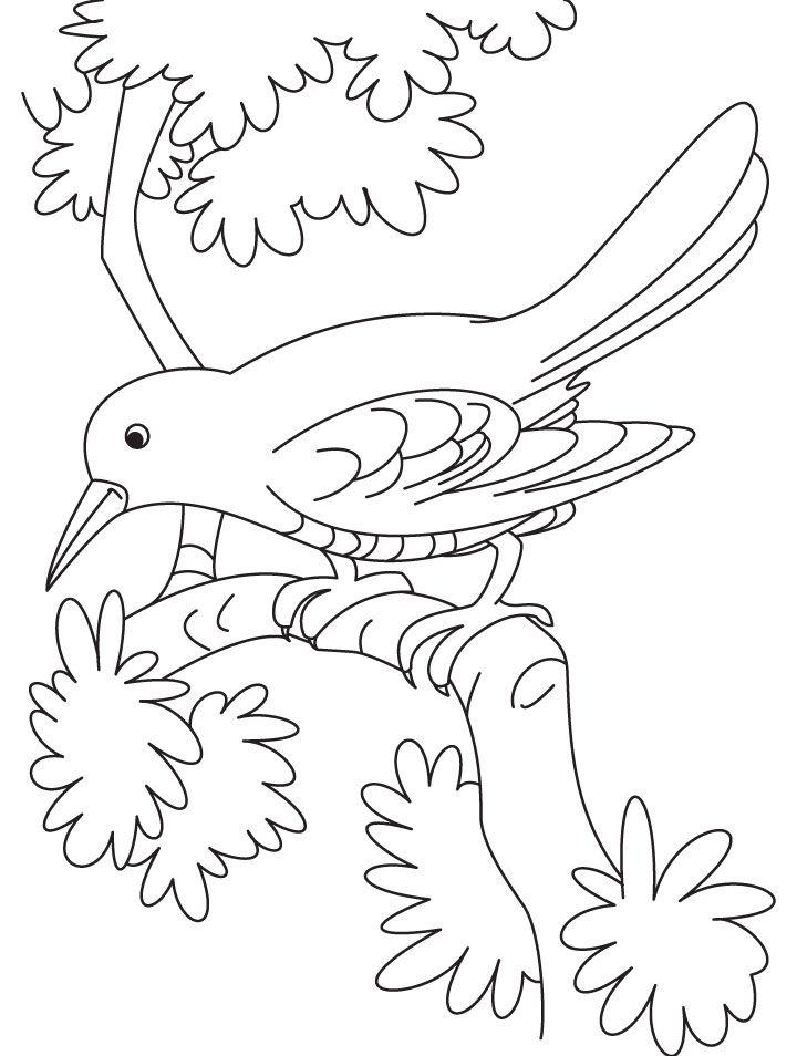 Cuckoo coloring #1, Download drawings