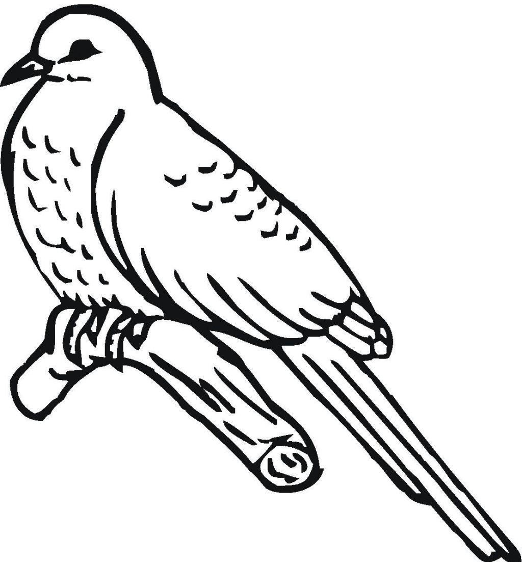 Cuckoo coloring #17, Download drawings
