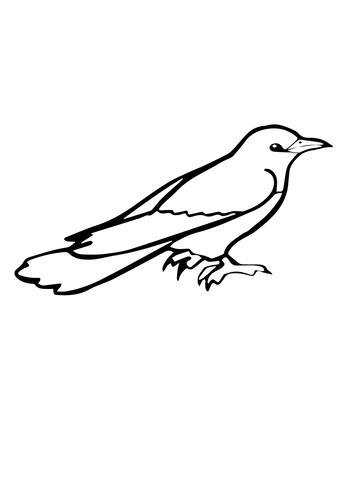 Cuckoo coloring #2, Download drawings