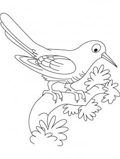 Cuckoo coloring #5, Download drawings