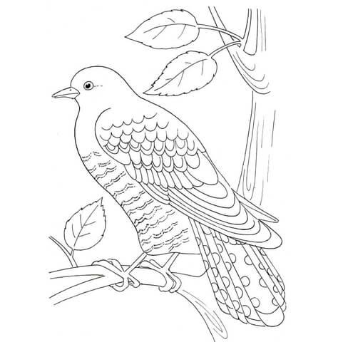 Cuckoo coloring #8, Download drawings