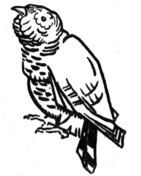 Cuckoo coloring #14, Download drawings