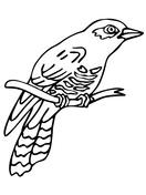 Cuckoo coloring #12, Download drawings