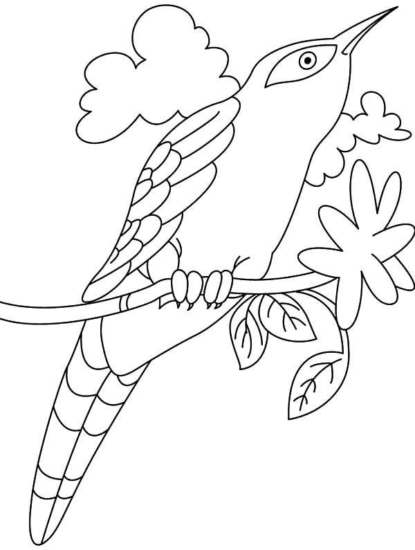 Cuckoo coloring #4, Download drawings