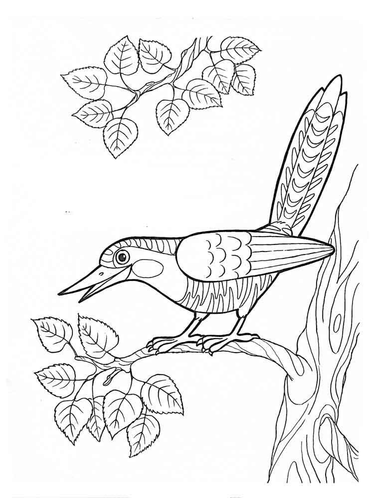 Cuckoo coloring #6, Download drawings