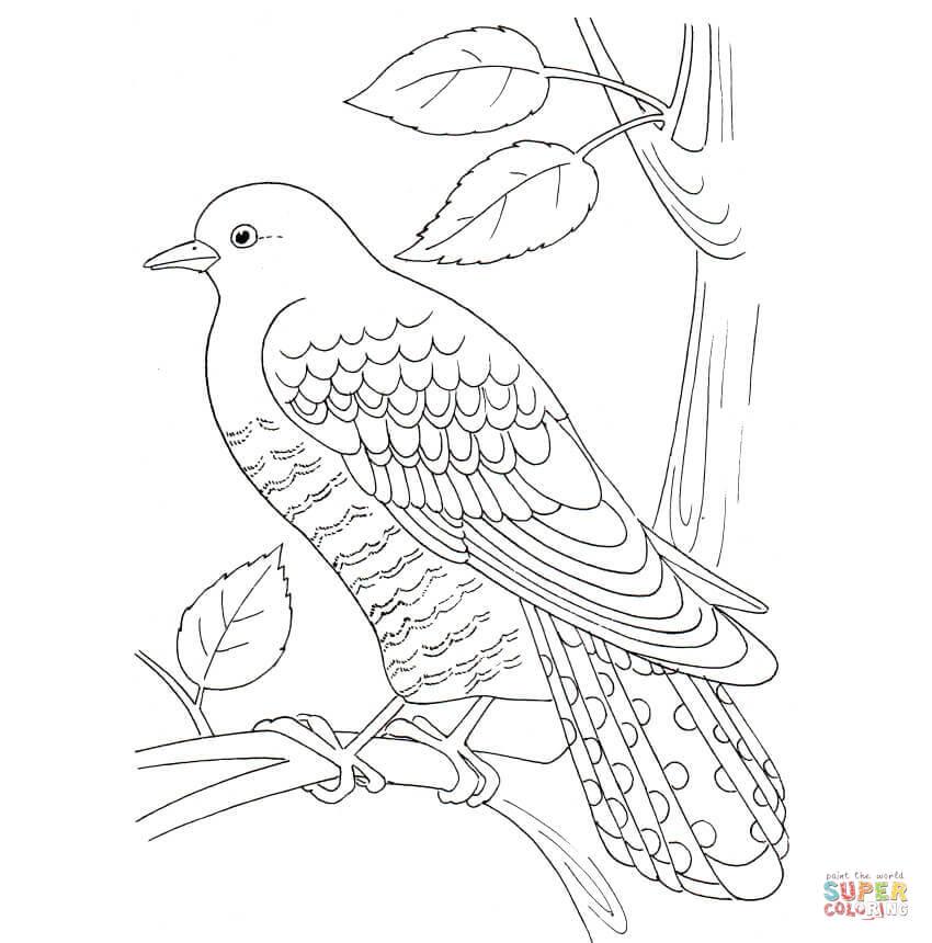 Cuckoo coloring #15, Download drawings