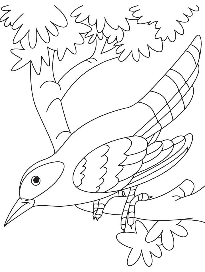Cuckoo coloring #10, Download drawings