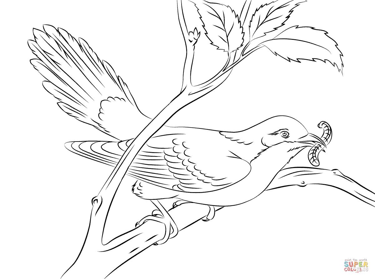 Cuckoo coloring #18, Download drawings
