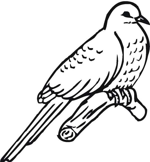 Cuckoo Coloring Download Cuckoo Coloring