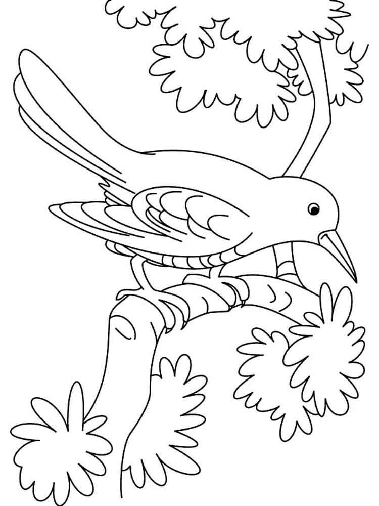 Cuckoo Coloring 10 Download Drawings