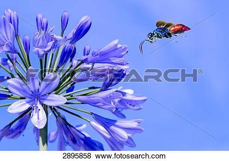 Cuckoo Wasp clipart #8, Download drawings
