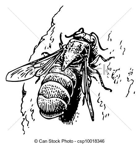 Cuckoo Wasp clipart #14, Download drawings