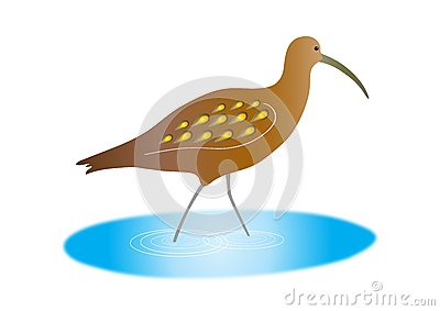 Curlew clipart #17, Download drawings