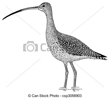 Curlew clipart #3, Download drawings