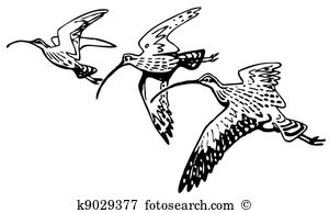 Curlew clipart #5, Download drawings
